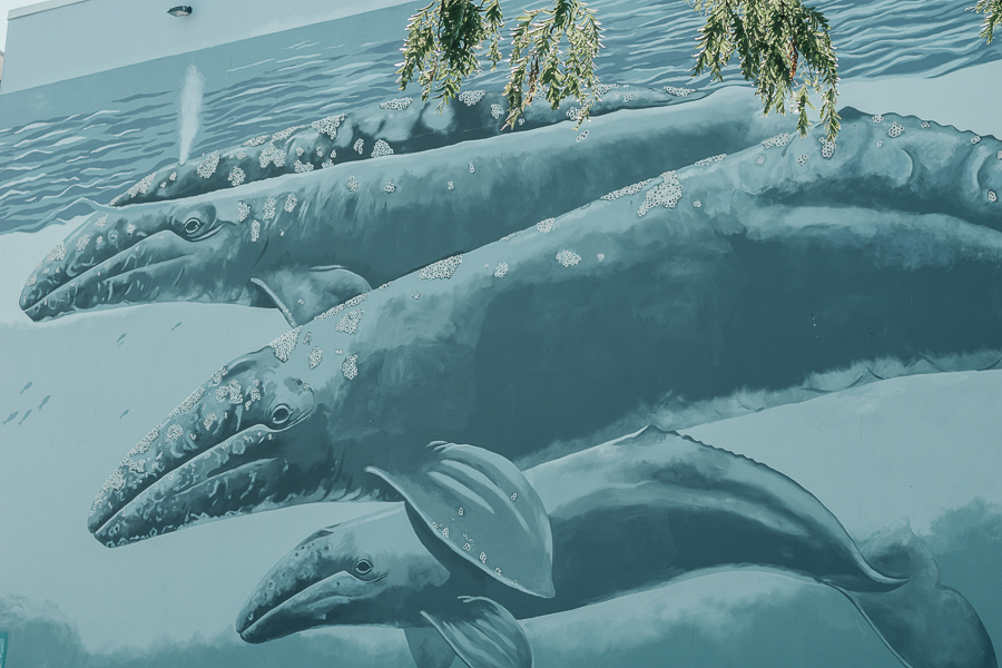 Wyland Whale Mural, White Rock
