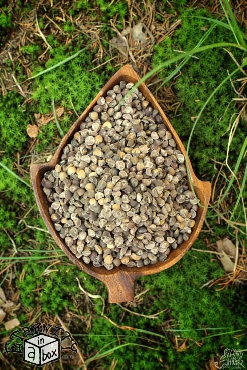 Hawaiian baby woodrose seeds 3
