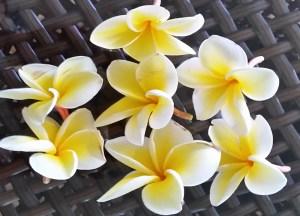HAWAII Maui Flowers