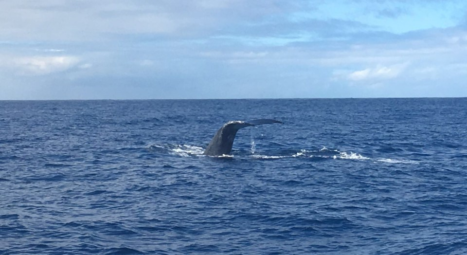 HAWAII Big Island Whale watchin