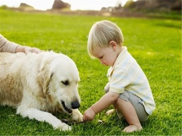 Caes sentem empatia por emoçoes humanas psicologia canina