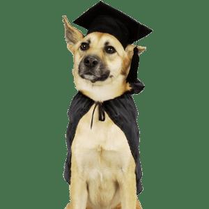 caes_psicologia_animal_ethos_comportamento_adestramento_helena_truksa