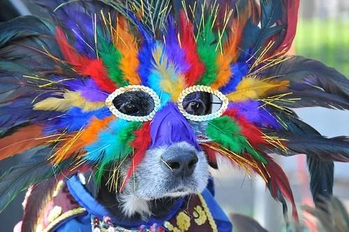 Cães, Gatos e aves no carnaval Pet Sitter