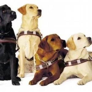 USP tem novo centro de treinamento de cães guia