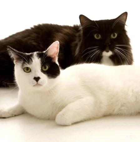 gatos_ethos_psicologia_animal_helena_truksa_terapia