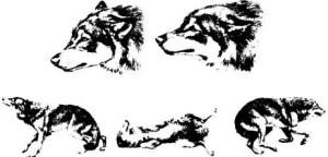 Comunicação em cães expressões corporais