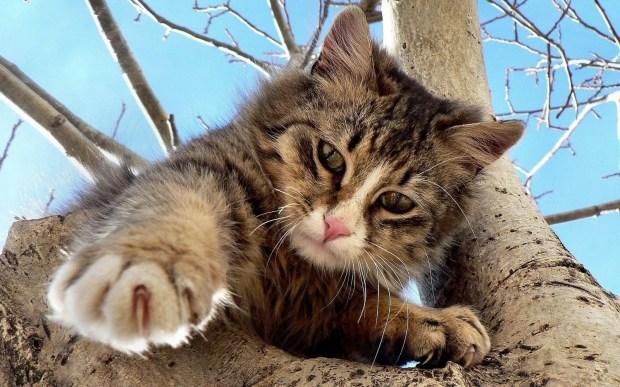 gatos-comportamento-subindo-arvore-ethos-psicologia-animal
