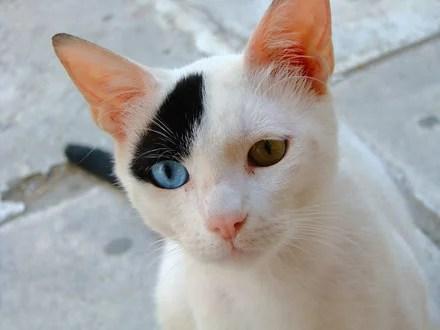 gato-comportamento-ethos-psicologia-animal