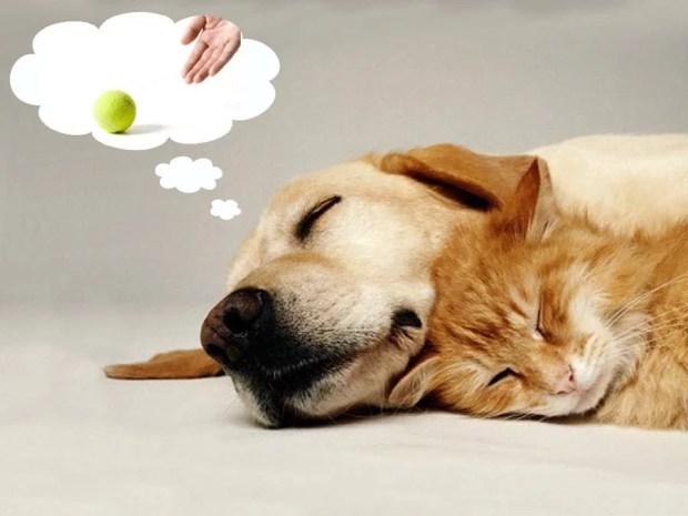 os cães sonham
