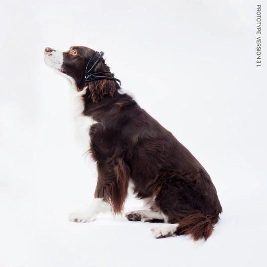 pensamento de cães traduzido por aparelho