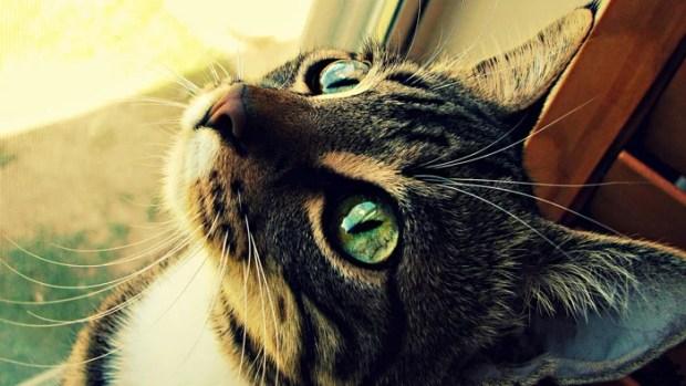 video gato salva criança de ataque cachorro ethos animal