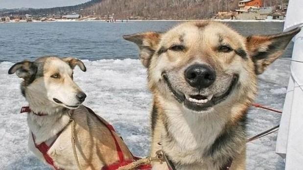 cao em harmonia cao feliz ethos animal comportamento animal aplicado adestramento helena truksa