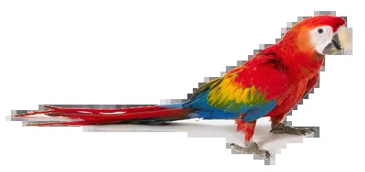 consulta comportamental animais silvestres ethos animal