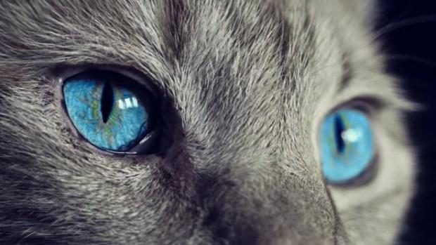 Como a evolução transformou os gatos em animais solitários ethos animal helena truksa comportamento animal felino