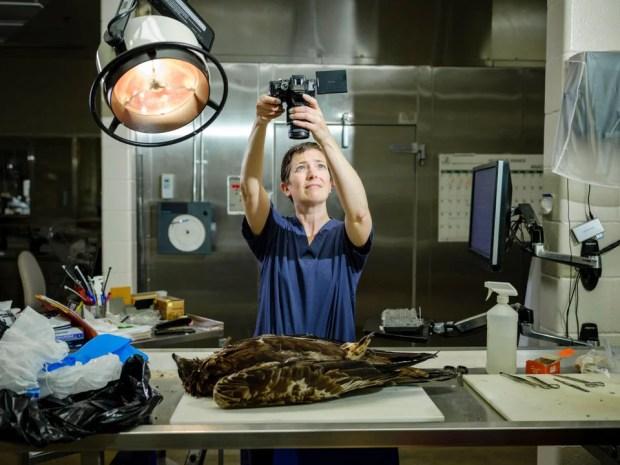 Laboratório de investigação forense nos EUA atua em crimes contra animais Ethos Animal Comportamento 05