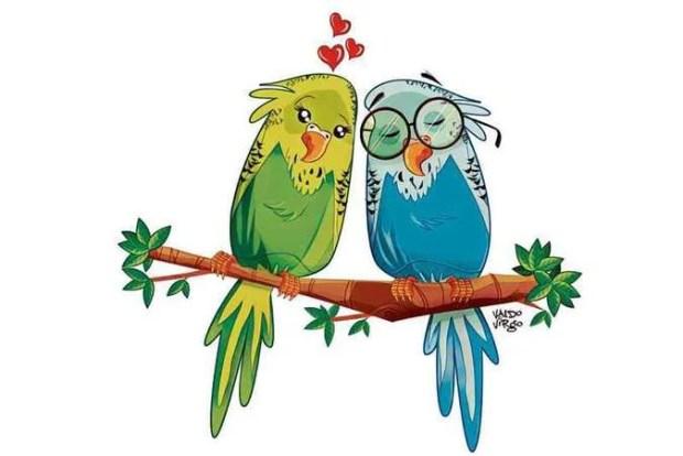 Fêmeas-de-periquito-australiano-preferem-os-machos-mais-inteligentes-Ethos-Animal-Comportamento