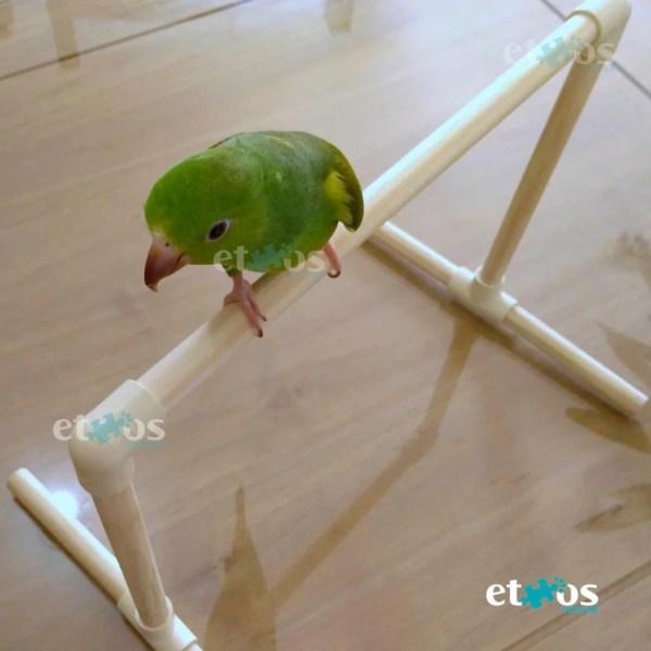 poleiro de treinamento parquinho para calopsita periquito agapornis ethos animal