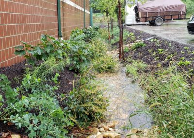 Community Rain Gardens