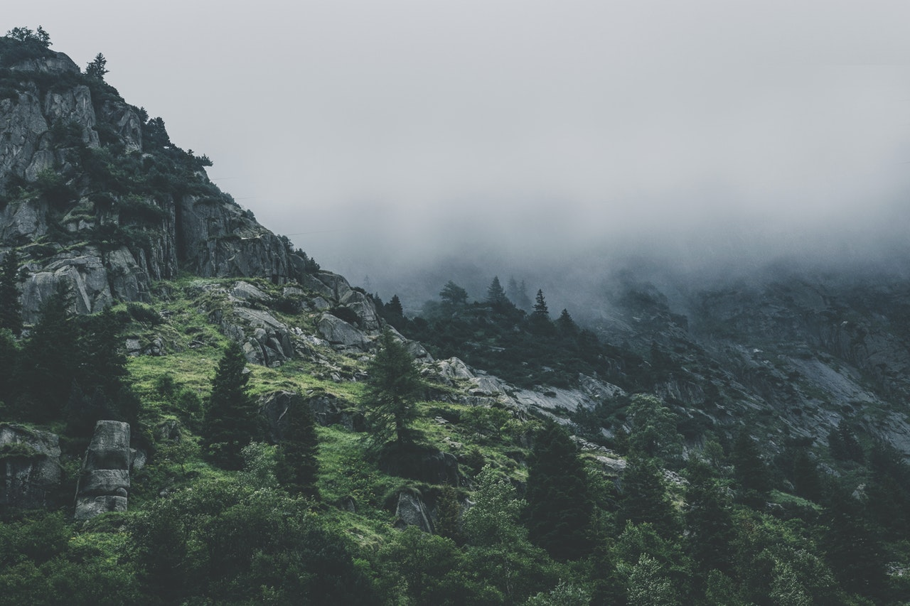 green-leafed-trees-during-fog-time-167684.jpg