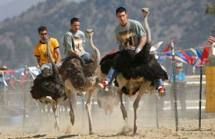 Protesters will oppose cruel and abusive ostrich races at Chandler Ostrich Festival