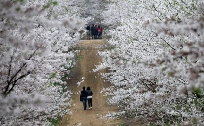 China's Largest Peach Blossom Field Drives Tourism Boom