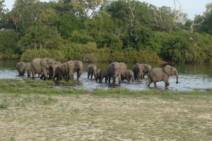 Germany releases 18 million euro for wildlife conservation in Tanzania