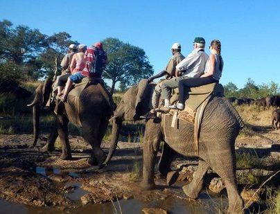 World Animal Protection issues statement on death of Zimbabwe elephant handler
