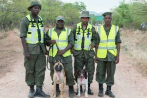 Tanzania's anti-poaching crusade takes new turn