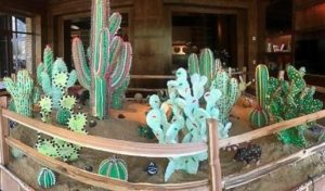 Sweet, edible cactus garden pops up in Arizona – just in time for the holidays