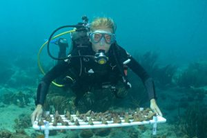 New coral restoration technique may boost success