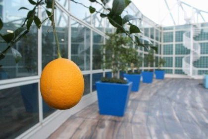 Innovative rooftop garden debuts at Los Angeles Convention Center
