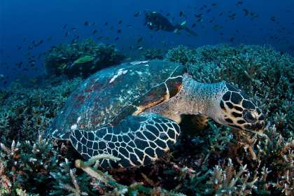 Labuan Bajo at  Komodo National Park is now under Indonesian Tourism Authority