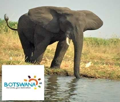Botswana: A go-to destination for safari