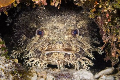 A toadfish attacked and injured two tourists at Whitsunday Islands in Queensland, Australia