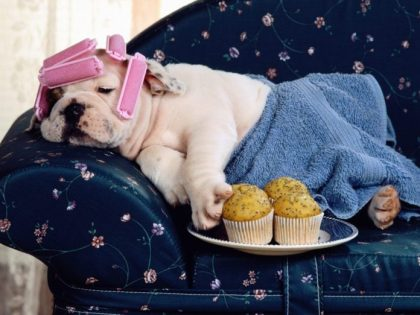 Canine comforts: Best US and UK locations to pamper your pooch revealed