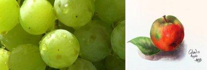 Cognac Begins with Grapes. Apples Become Calvados