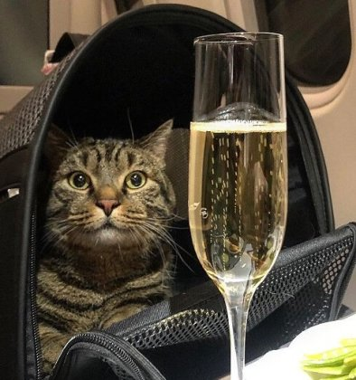 Russian fat cat owner tricks airline with 'cat double'
