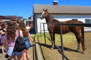 Екскурсія Жашківський кінний завод