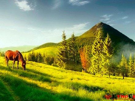 Поход на гору Хомяк