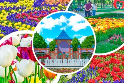 Цвітіння тюльпанів, Дендропарк у Кропивницькому