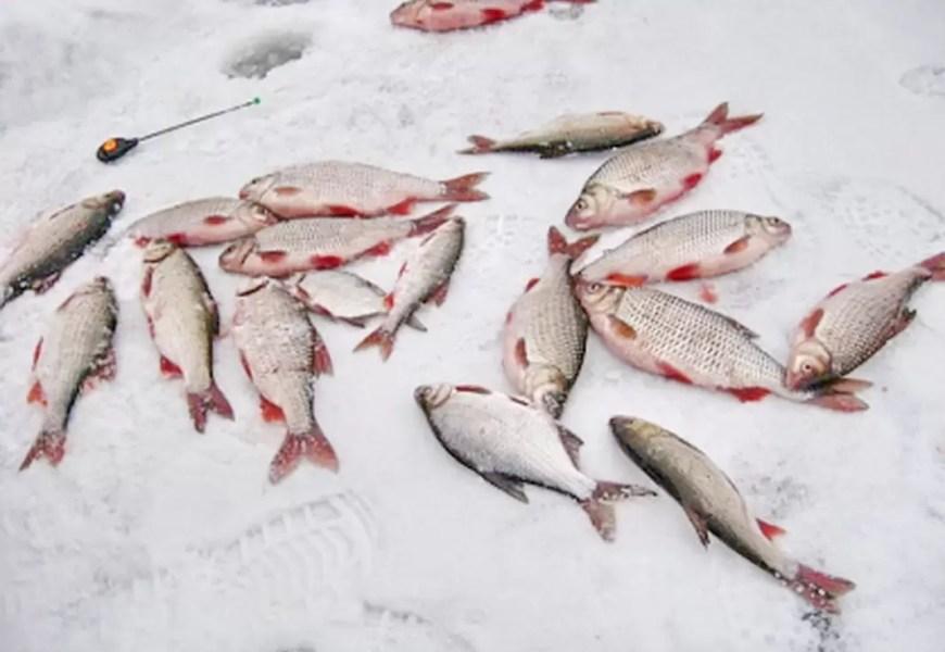 В Тюмени будут судить местного жителя за продажу зараженной рыбы из Нефтеюганска