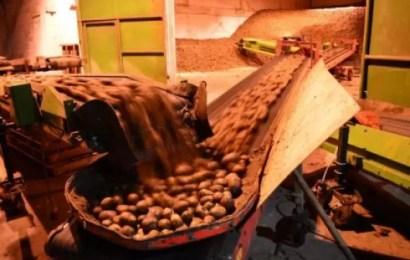 Россиян накормят картошкой экономкласса