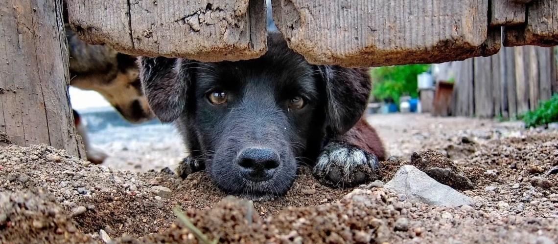 В Госдуму внесли законопроект об обязательной регистрации домашних животных