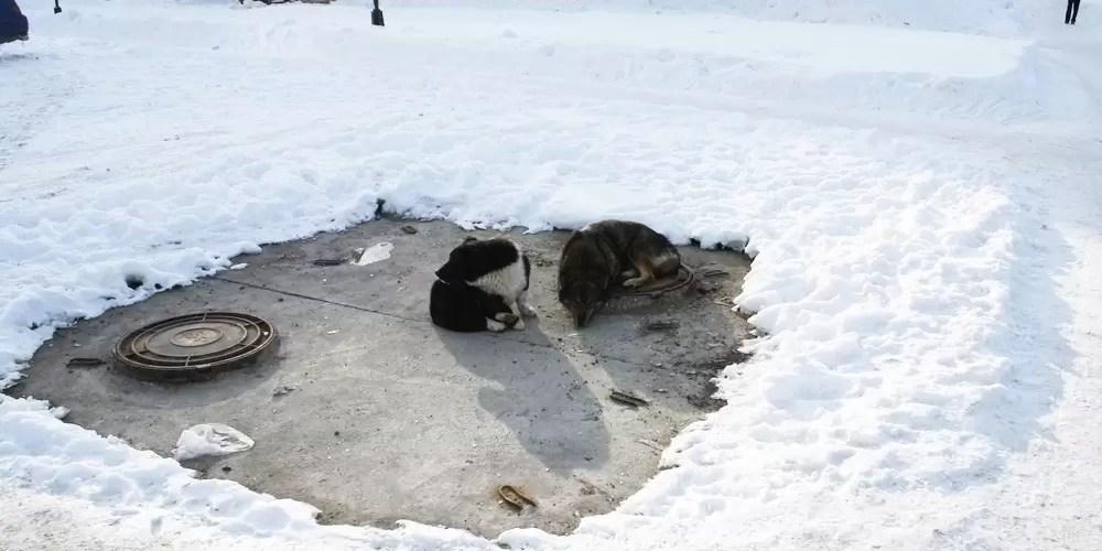 В Госдуме заблокировали законопроект о праве регионов усыплять животных