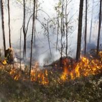 11 муниципалитетов Югры ввели особый противопожарный режим