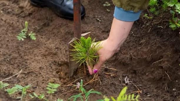 В Югре восстановят 100 тыс. гектаров леса