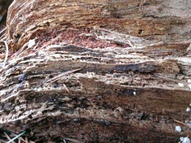 Details of the stump