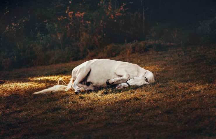 animal head mane horse