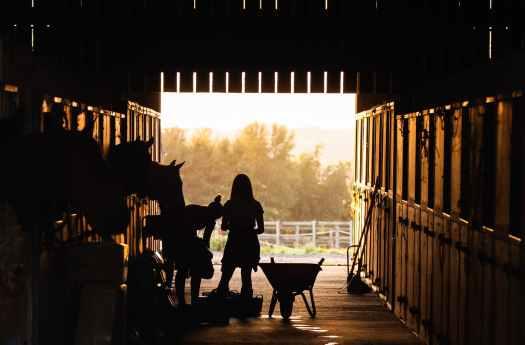 silhouette of women feeding horses