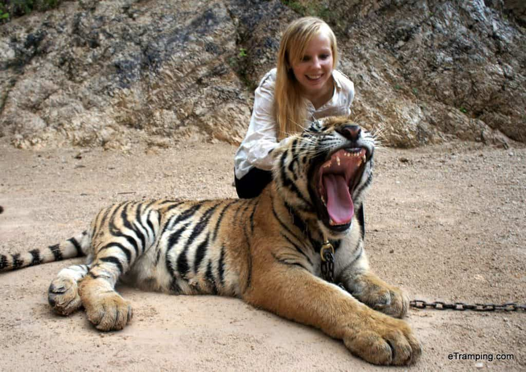 Tiger Temple, photo with a tiger
